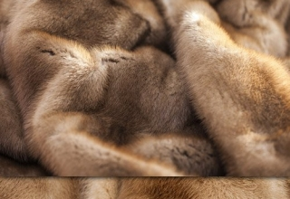 Texture of fur fox, mink and sable